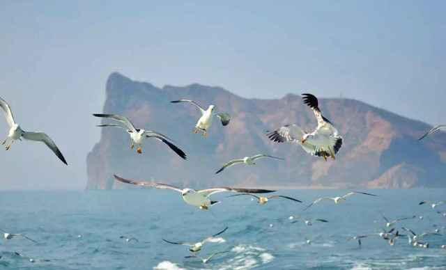 6月19日-6月22日蓬莱长岛,万鸟岛,海豹苑,蓬莱阁,拍海鸥,戏海豹,吃