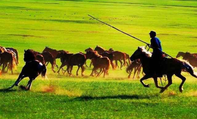鄂尔多斯大草原一日游