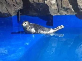 千岛湖海洋馆-美团