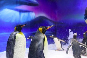 正佳极地海洋世界-美团
