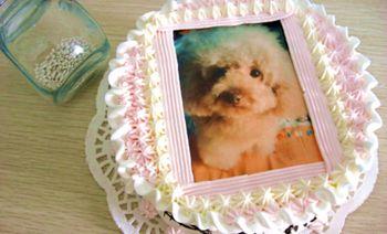 鲸鱼岛DIY蛋糕生活馆-美团