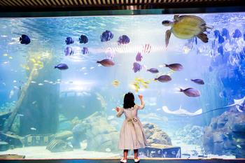 锦艺城海洋馆-美团