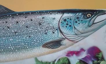 鱼味鲜三文鱼-美团