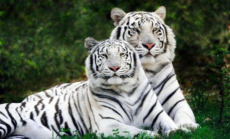 【北京常州淹城动物园团购】淹城野生动物世界常州园
