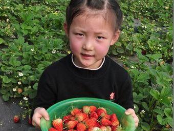 薇薇草莓园