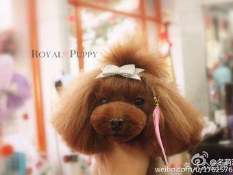 Royal Puppy 名萌汪族
