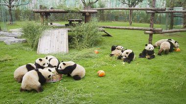 【南通出发】上海野生动物园纯玩1日跟团游*含门票,畅游动物王国-美团