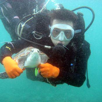 【陵水县】分界洲岛门票+船票+海洋文化馆门票+远海潜水成人票-美团