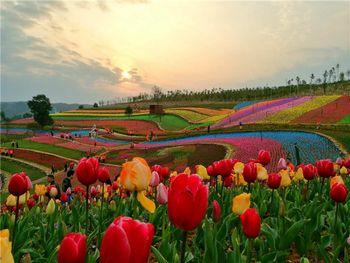 【萍乡出发】凯光新天地新余亚热带植物园纯玩1日跟团游*赏花季-美团