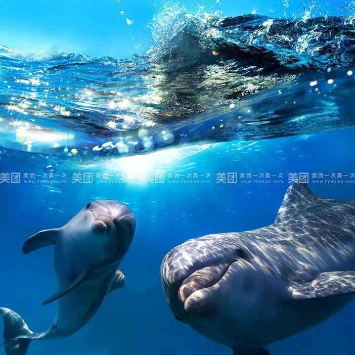 壁纸 动物 海洋动物 桌面 702_702