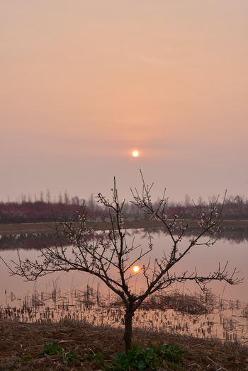 【泗洪县】洪泽湖湿地公园园内套票(观光小火车+芦苇迷宫游船+鱼族馆门票)-美团