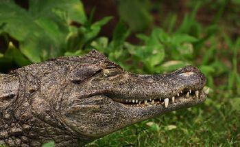【其它】长隆飞鸟乐园特定日门票+广州长隆野生动物世界特定日门票(成人票)-美团