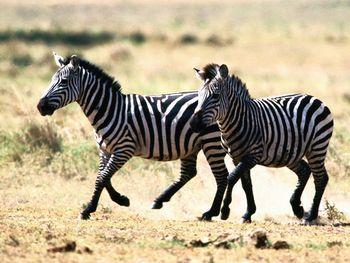【八达岭】八达岭野生动物园-美团