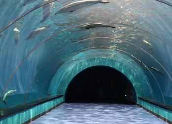 【极地海洋世界】青岛极地海洋世界-美团