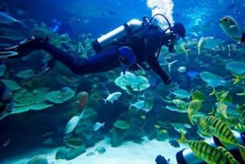 【工体】富国海底世界-美团