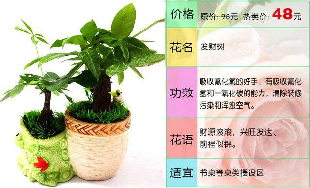 :长沙今日团购:【燕姿花艺】发财树盆栽办公室内桌面防辐射绿色植物1盆,提供免费WiFi