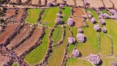 【拉萨出发】米拉山、巴松措景区、八一镇等纯玩5日跟团游*赠桃花沟,石锅鸡-美团