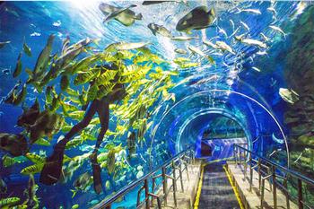 【航天桥】太平洋海底世界-美团
