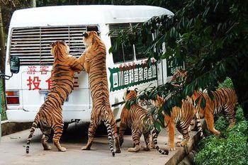 【碧峰峡】碧峰峡野生动物园-美团