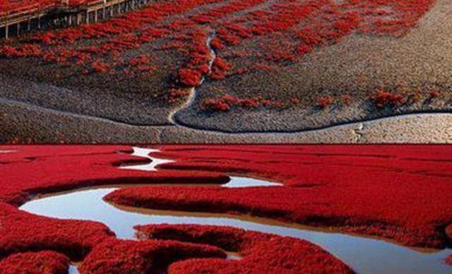 红海滩风景区电话_