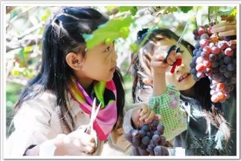 【道滘镇】龙洲湾都市农业观光园-美团