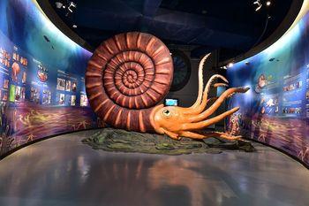 【星海湾/星海广场】贝壳博物馆门票家庭票2大1小-美团