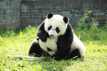 【汶川县】【特惠】中华大熊猫苑门票成人票-美团