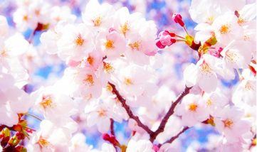 【三台县】绵阳盛世樱花悠乐谷-美团
