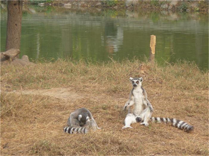 【北京固安福朋酒店住宿1晚 获赠野生动物园门票 多种