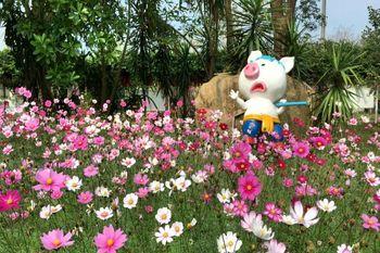 【温泉镇】宝趣玫瑰园-美团