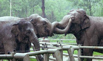 【浑南区】沈阳森林动物园-美团