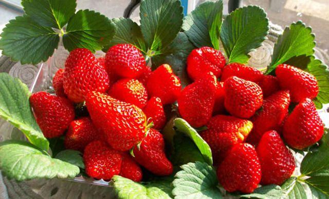 丹东冰冻草莓网红冰点牛奶水果草莓罐头新鲜丹东99草莓3盒装包邮