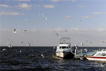 【萨尔图区】黑鱼湖-美团