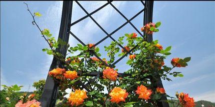 【牡丹庄园】丽盛玫瑰庄园-美团