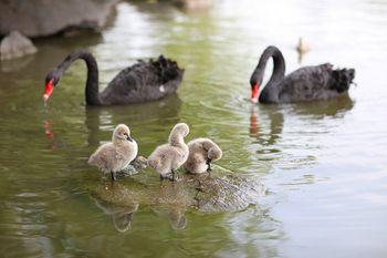 【野生动物园】上海野生动物园双人票(送普通马戏下午场)-美团