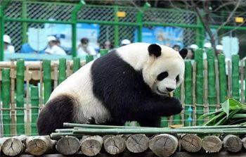 【亚布力滑雪旅游度假区】亚布力森林动物园(熊猫馆)门票(成人票)-美团