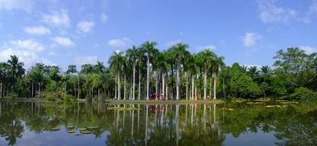 【西双版纳出发】中国科学院西双版纳热带植物园纯玩1日跟团游*植物园深度纯玩一日游-美团