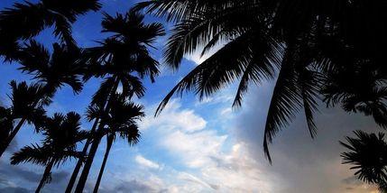 【兴隆热带植物园】兴隆南国雨林门票(成人票)-美团