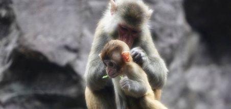 【东钱湖】雅戈尔动物园-美团