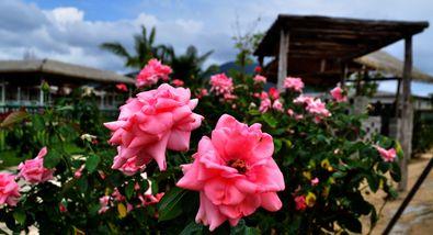 【其它】亚龙湾国际玫瑰谷联票+亚龙湾爱立方滨海乐园门票(成人票)-美团