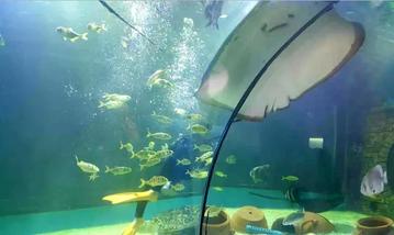 【苏州乐园】苏州乐园海底世界-美团