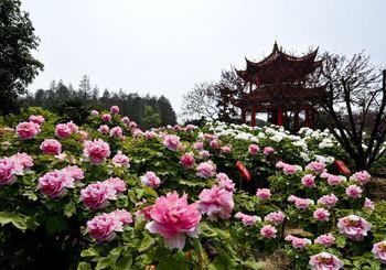 【东湖风景区】东湖牡丹园成人票-美团