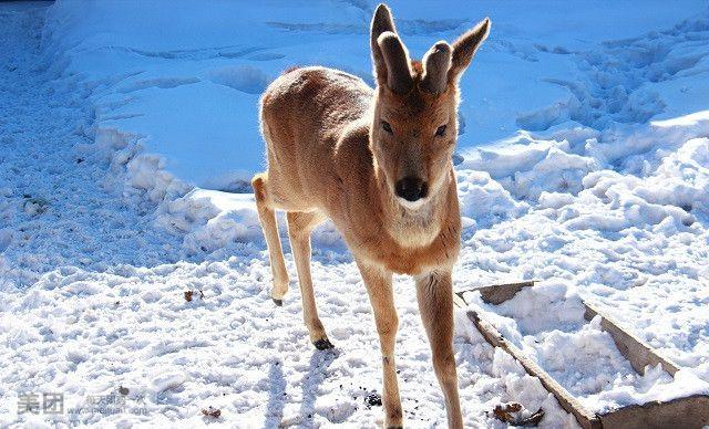 农村雪地动物图片