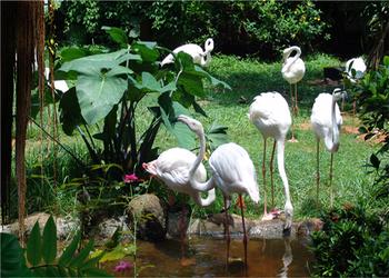 【秀英区】海南热带野生动植物园双人门票-美团