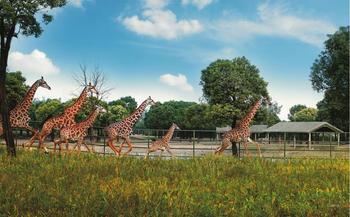 【浦东新区】上海野生动物园-美团