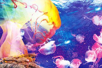 【其它】成都海昌极地海洋公园大门票+梦幻水母馆门票(成人票)-美团