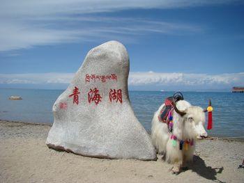 【兰州出发】塔尔寺、茶卡盐湖、青海湖3日跟团游*醉美青海+天空之境-美团