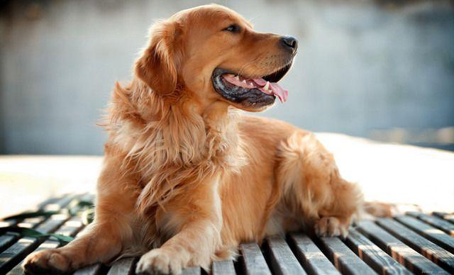 米修宠物馆小型犬寄养,仅售19.9元!价值25元的小型犬寄养1次,提供免费WiFi。