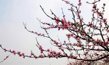 【重庆出发】虎峰山1日跟团游-美团