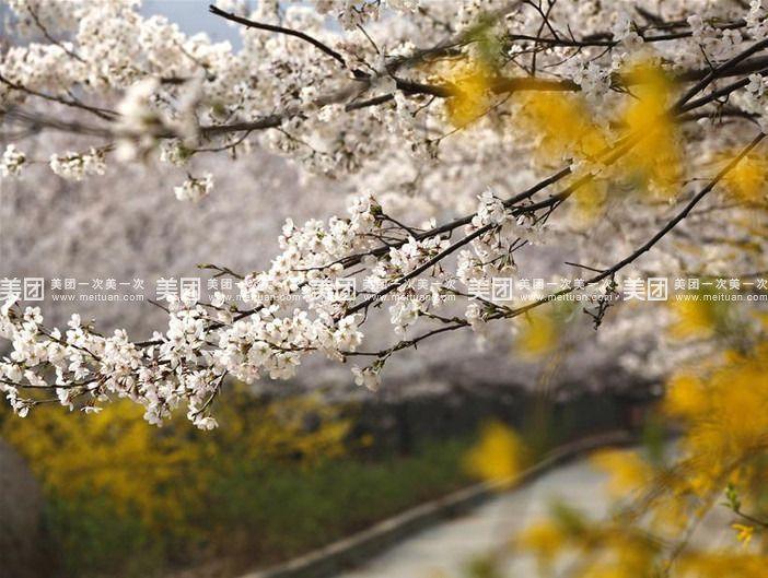 【北京邹平樱花山风景区门票团购】樱花山风景区邹平